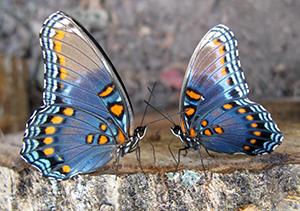 Долина бабочек - достопримечательности Родоса