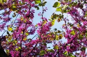 корфу весной