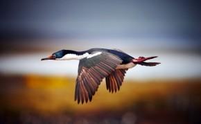 птицы греции