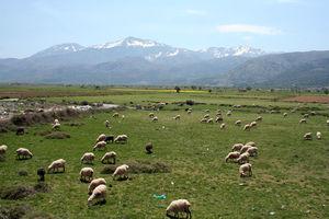 сельское хозяйство греции
