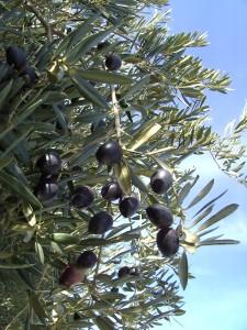 флора греции
