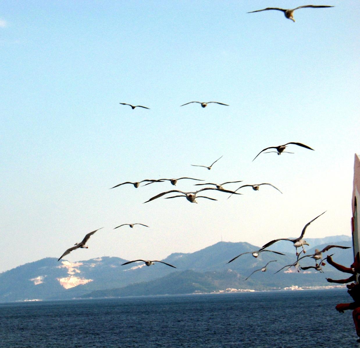 на острове тасос греция