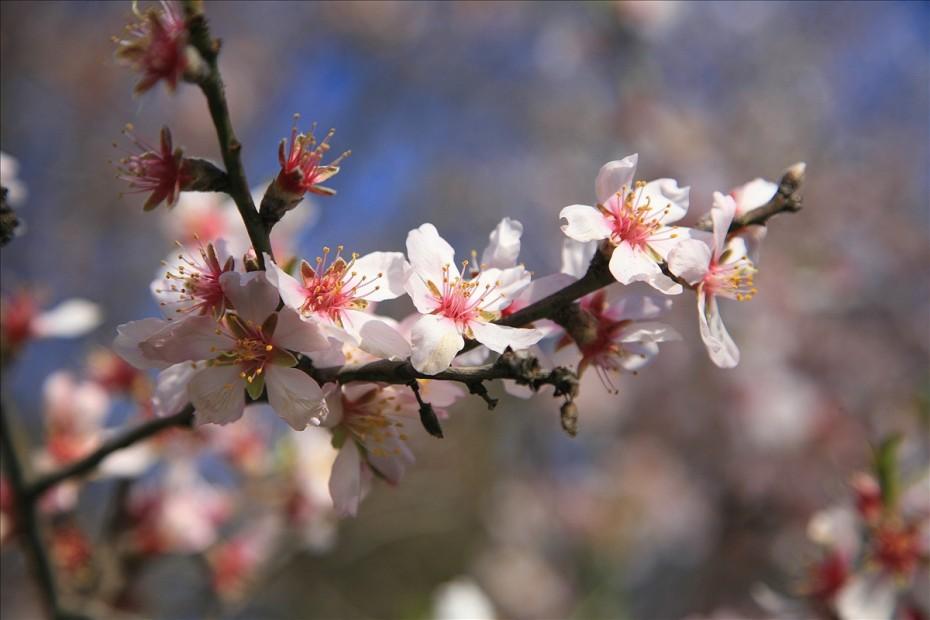 ретимно весной