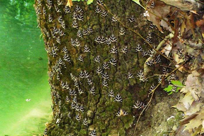 Долина бабочек Родос: как добраться, что посмотреть, цена и правила посещения