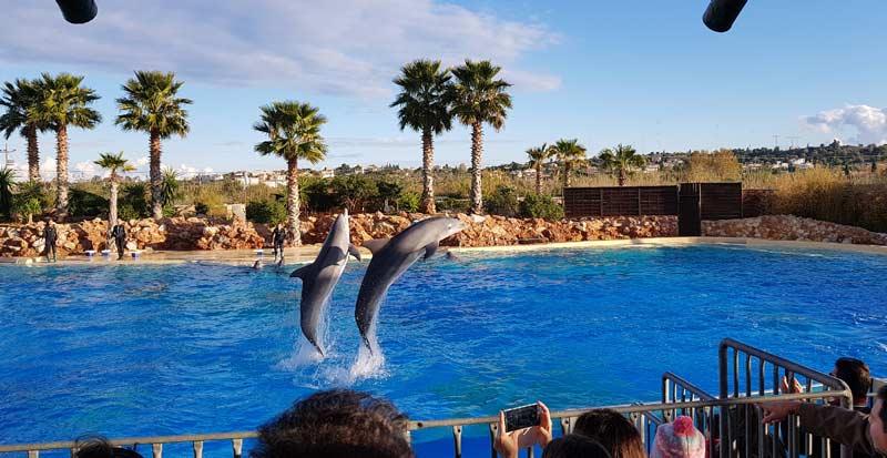 Дельфинарий в зоопарке Афин