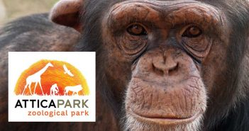 Зоопарк в Афинах «Attica Zoological Park»