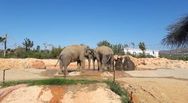 Слоны в зоопарке Афин