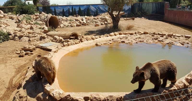 Медведи в афинском зоо