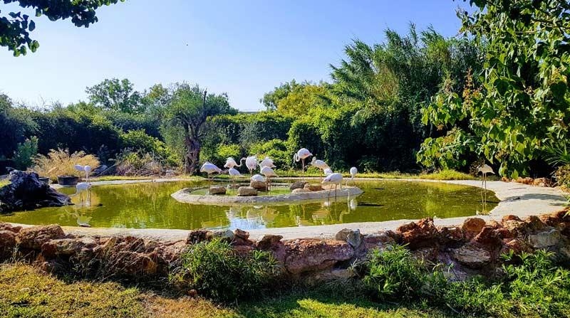 Attica Zoological Park что посмотреть